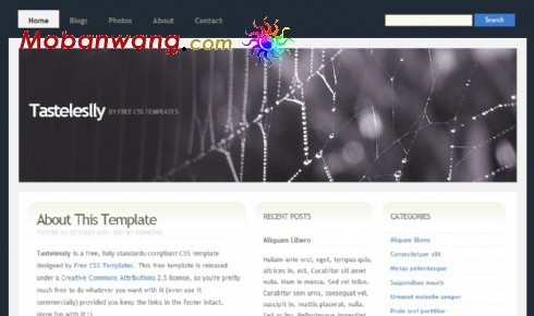蜘蛛网主题BLOG网页模板