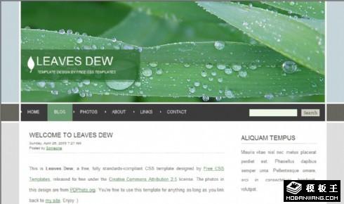 绿叶露水主题BLOG网页模板