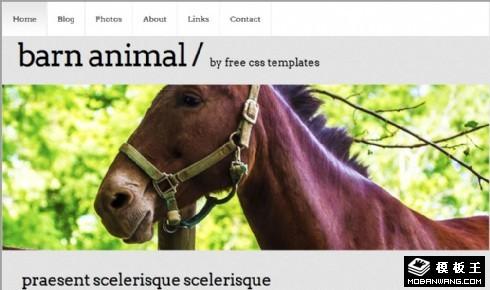 谷仓动物信息网页模板