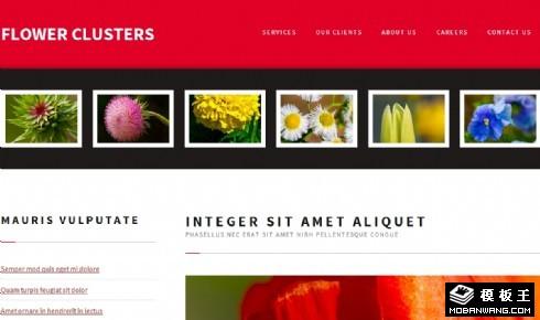 花簇锦攒图册网页模板