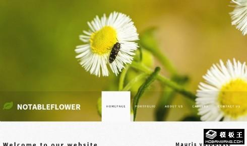 白菊花主题介绍网页模板