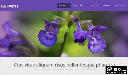 猫薄荷紫蓝色网页模板