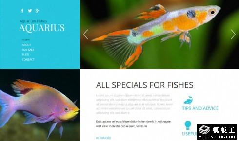 蓝色观赏鱼水族馆响应式网页模板