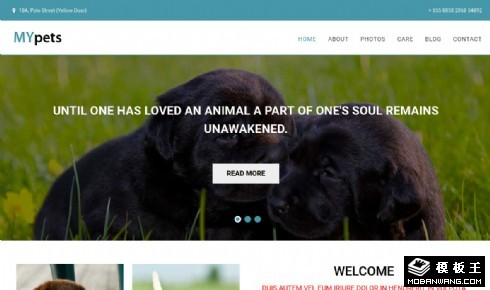 宠物机构介绍响应式网页模板