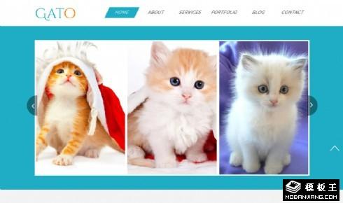 小猫宠物乐园响应式网页模板