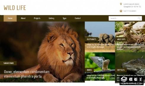 野生动物研究响应式网站模板