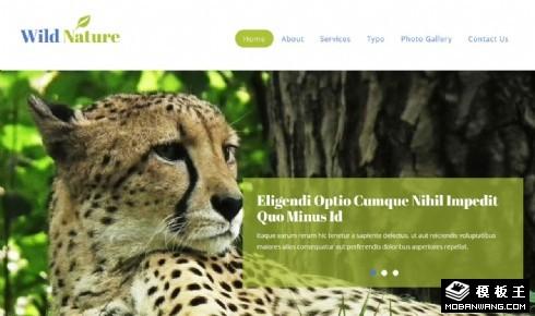 野生动物介绍信息响应式网站模板