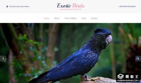 奇异鸟类响应式网页模板