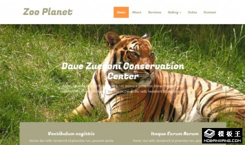 野生动物园响应式网页模板