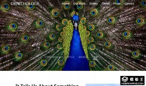 鸟类信息展示响应式网页模板