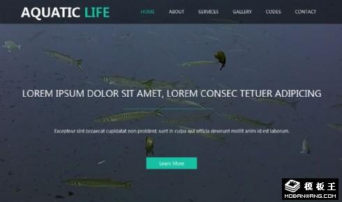 水族生活馆响应式网站模板