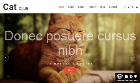 猫咪乐园响应式网页模板