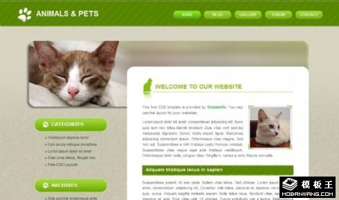 绿色宠物信息动态网页模板
