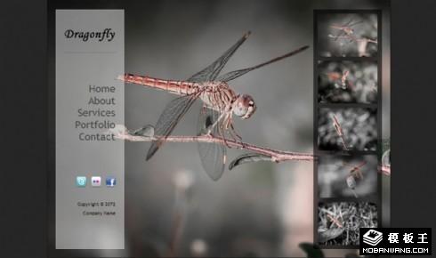 蜻蜓图片展示信息网页模板