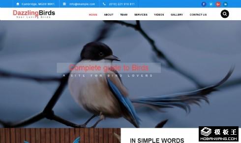鸟类保护公益组织响应式网页模板