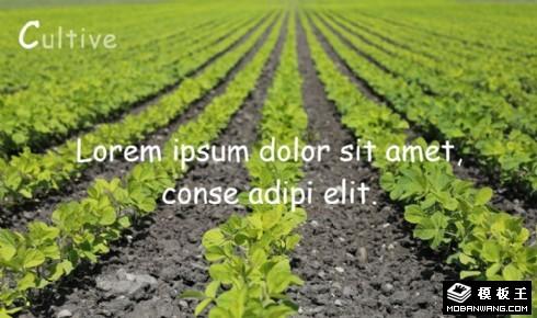 农业采割解决方案响应式网页模板