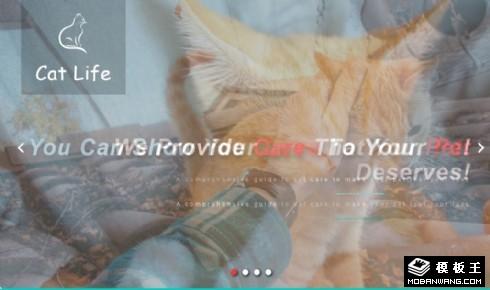 猫生活宠物动态响应式网页模板