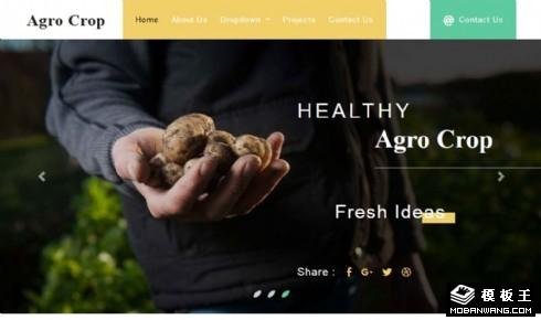 农作物产品展示响应式网站模板