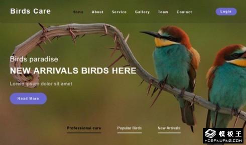 鸟类保护中心响应式网页模板