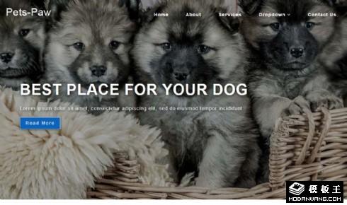 宠物生活乐园展示响应式网站模板