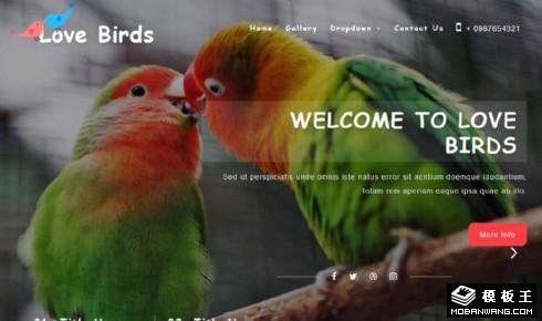 爱鸟服务中心展示响应式网页模板