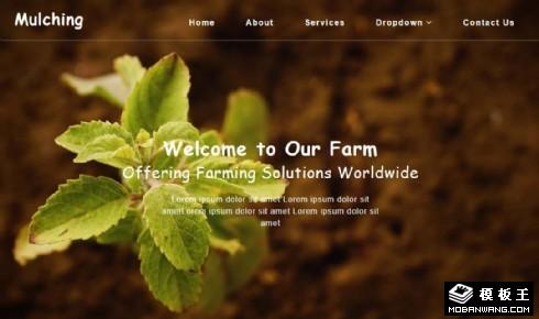 农业发展解决方案响应式网页模板