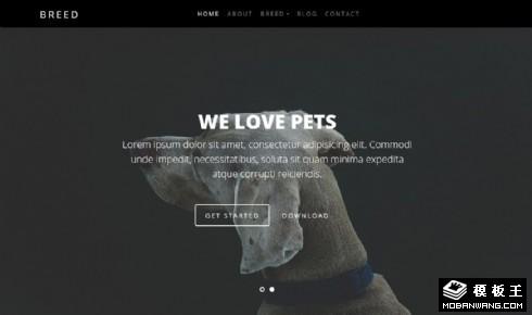 宠物狗服务中心展示响应式网站乐虎国际手机