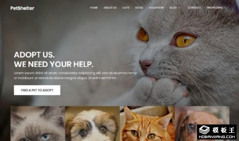 动物收养中心响应式网站模板